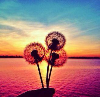 168782-Dandelion-Sunset